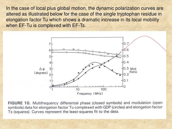 In the case of local plus global motion, the dynamic polarization curves are altered as illustrated below for the case of the single tryptophan residue in elongation factor Tu which shows a dramatic increase in its local mobility when EF-Tu is complexed with EF-Ts.