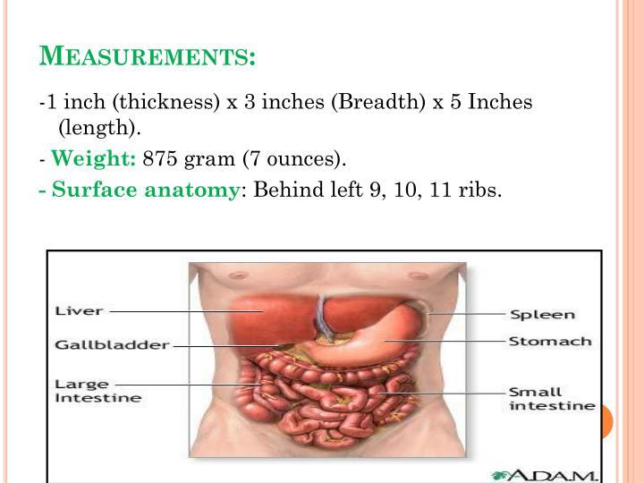 Ppt Spleen Powerpoint Presentation Id5745023