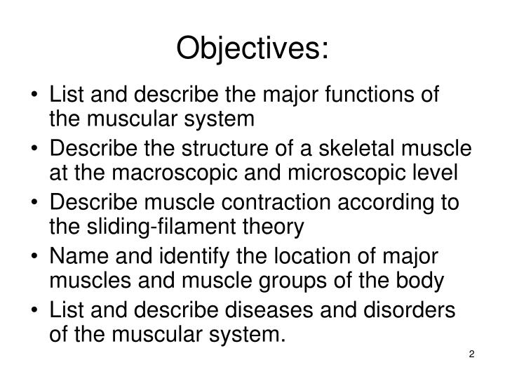 Ppt The Muscular System Powerpoint Presentation Id5746212