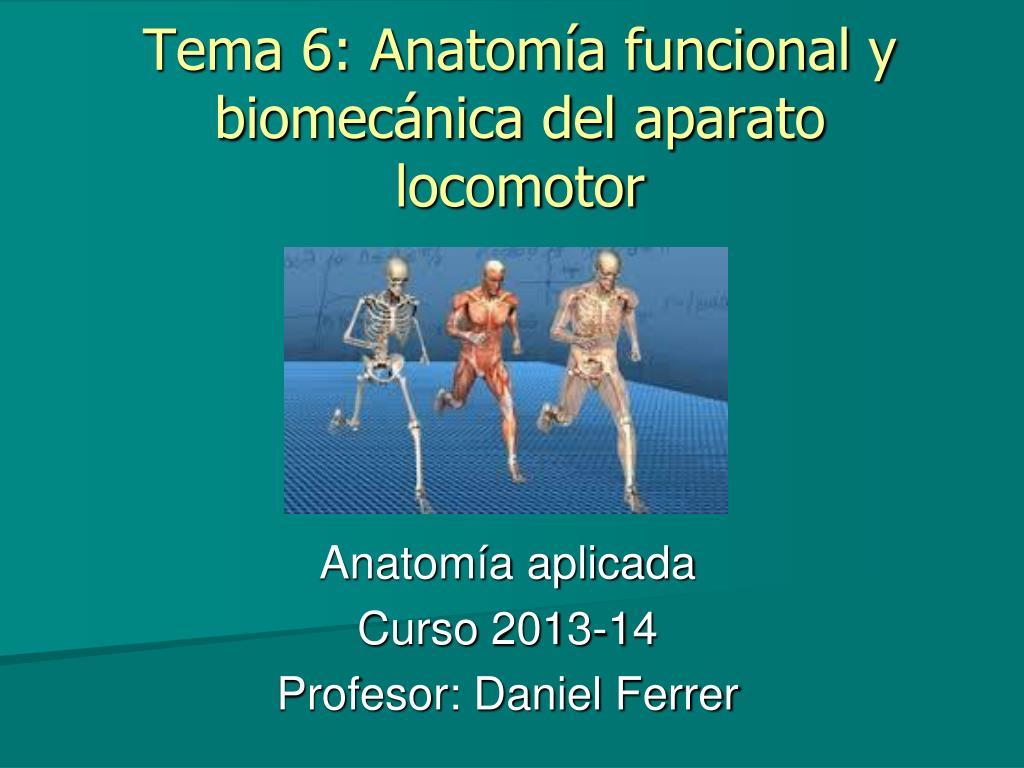 PPT - Tema 6: Anatomía funcional y biomecánica del aparato locomotor ...