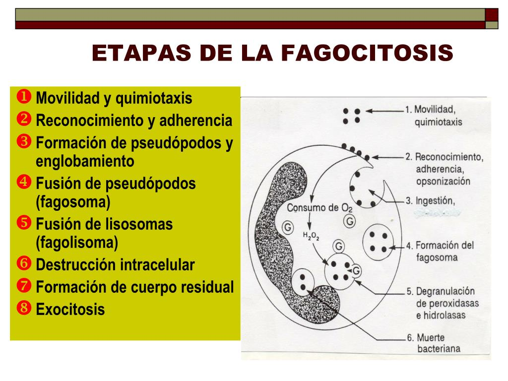 PPT - ASPECTOS BASICOS DE LA INFLAMACION PowerPoint..