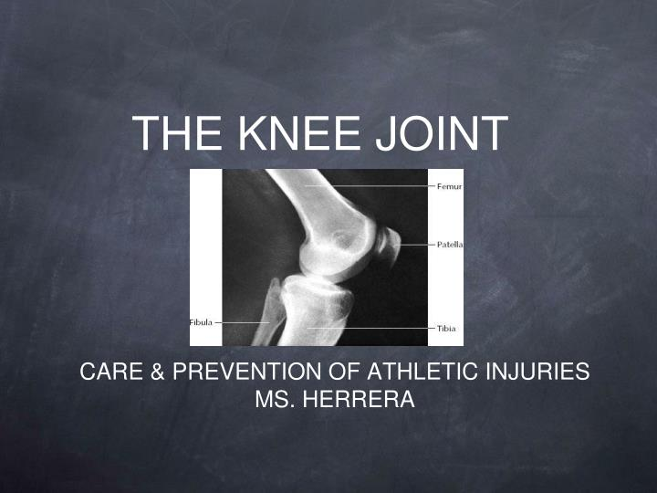 the knee joint n.