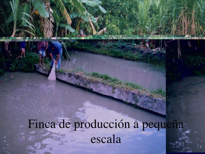 Finca de producción a pequeña escala