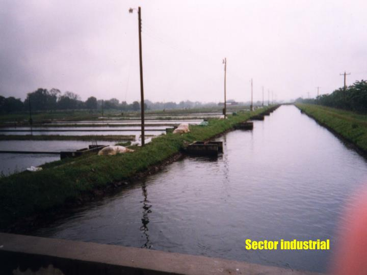 Sector industrial