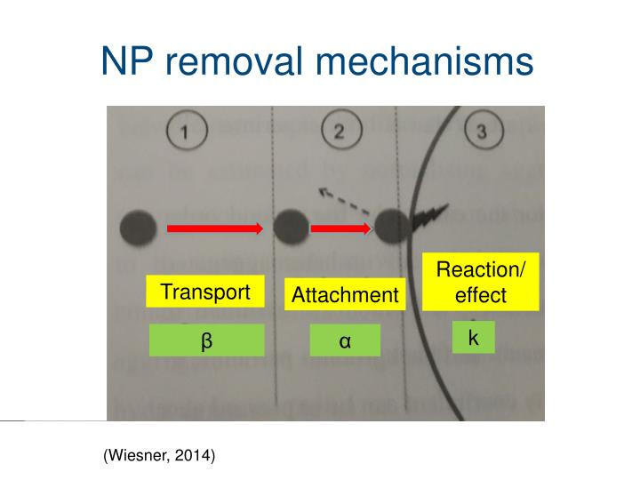 NP removal mechanisms