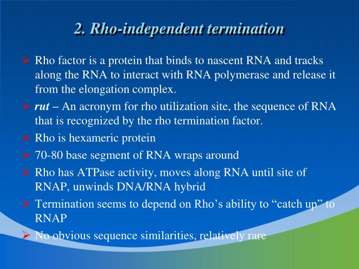 2. Rho-independent termination