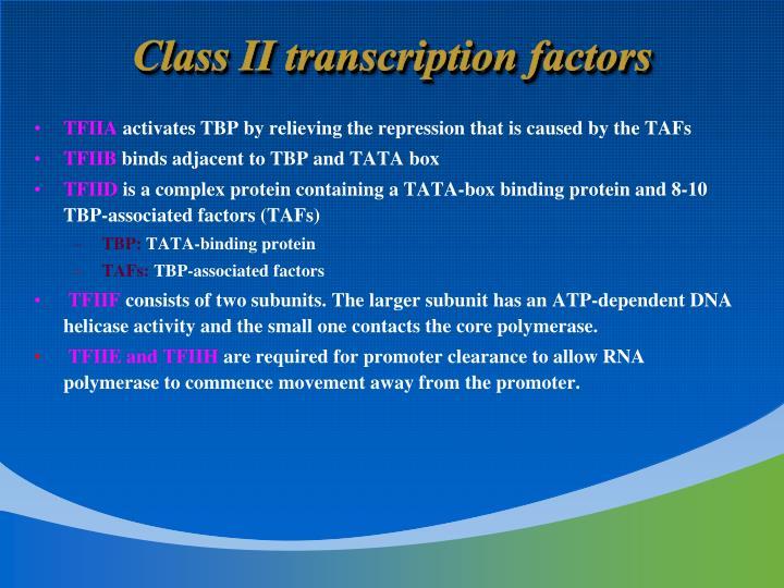 Class II transcription factors