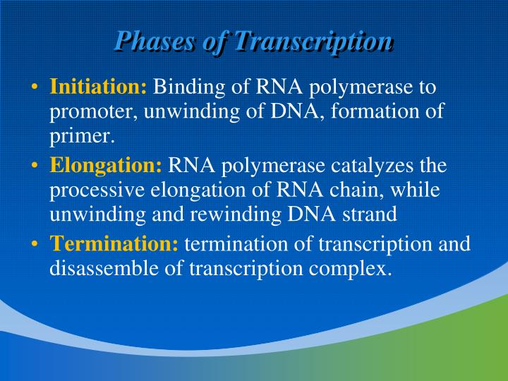 Phases of Transcription