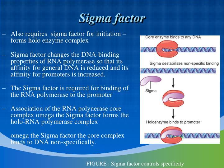Sigma factor