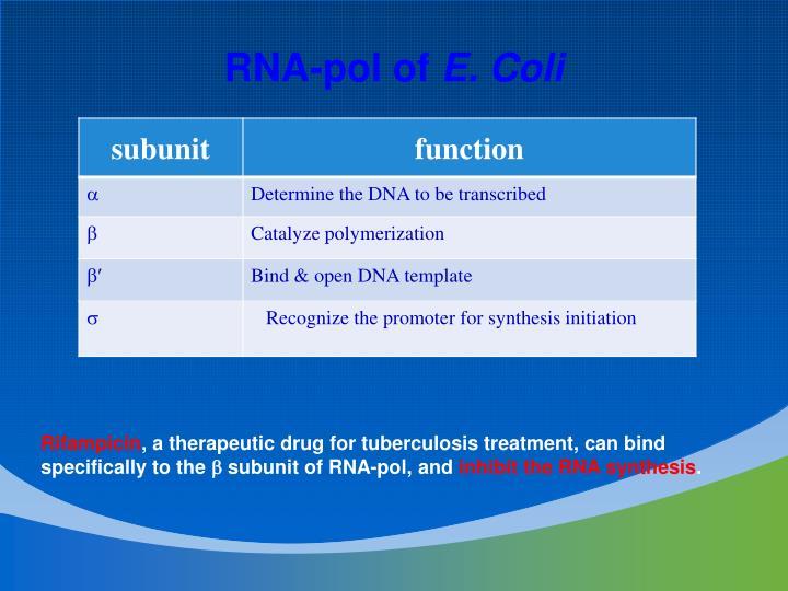 RNA-pol of