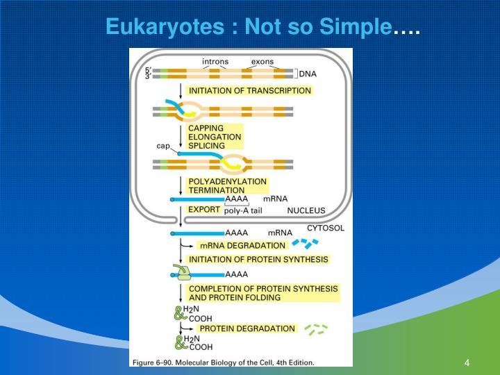 Eukaryotes : Not so Simple