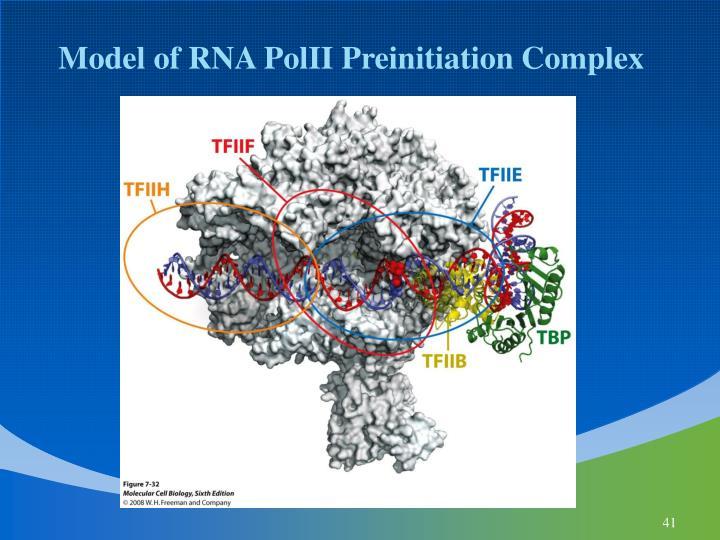 Model of RNA PolII Preinitiation Complex