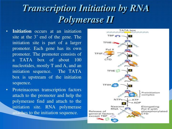 Transcription Initiation by RNA Polymerase II