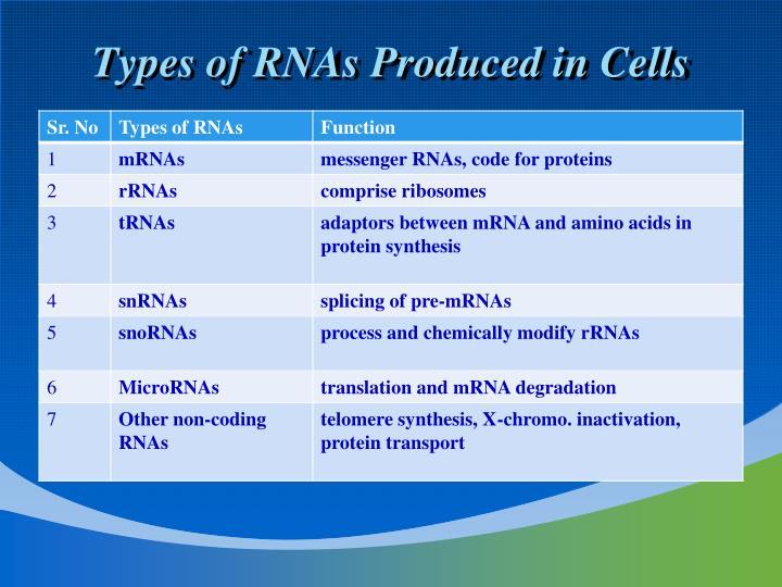 Types of RNAs Produced in Cells