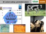 m avium subesp paratuberculosis