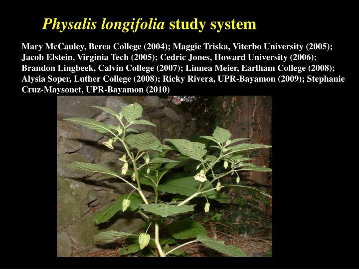 Physalis longifolia