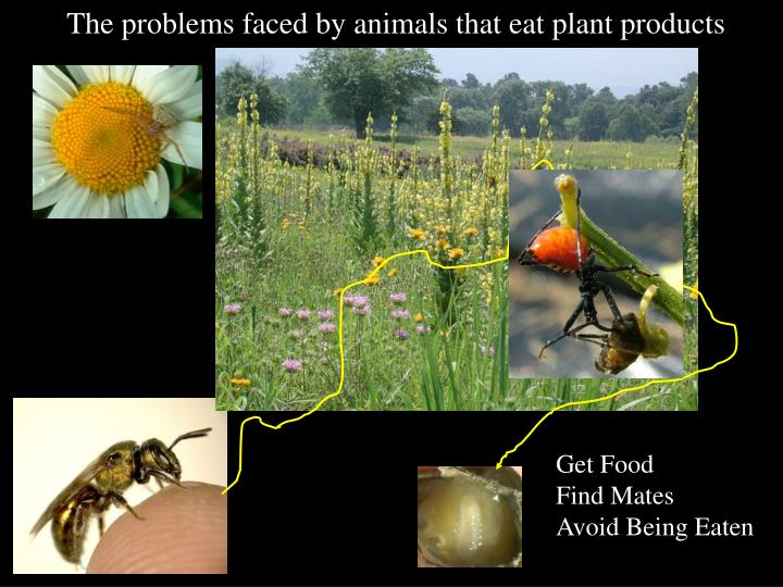 The problems faced by animals that eat plant products