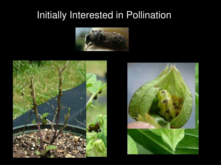 Initially Interested in Pollination