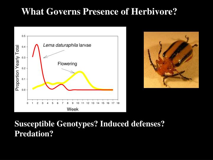 What Governs Presence of Herbivore?