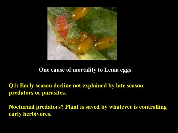 One cause of mortality to Lema eggs