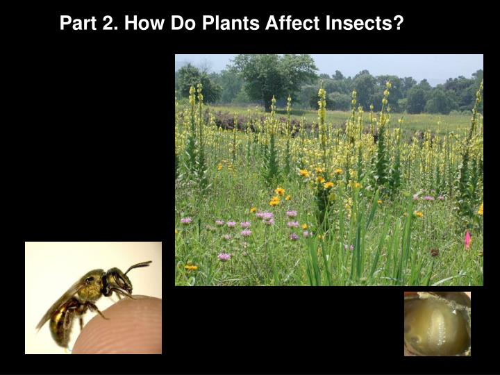 Part 2. How Do Plants Affect Insects?