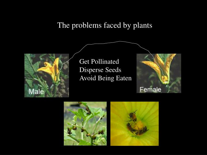 The problems faced by plants