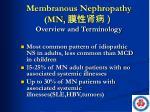 membranous nephropathy mn
