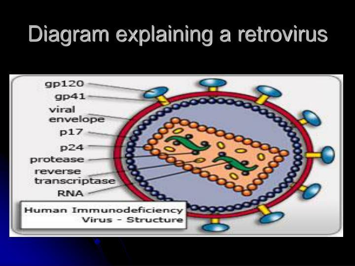 Diagram explaining a retrovirus