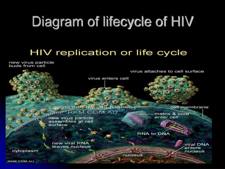 Diagram of lifecycle of HIV