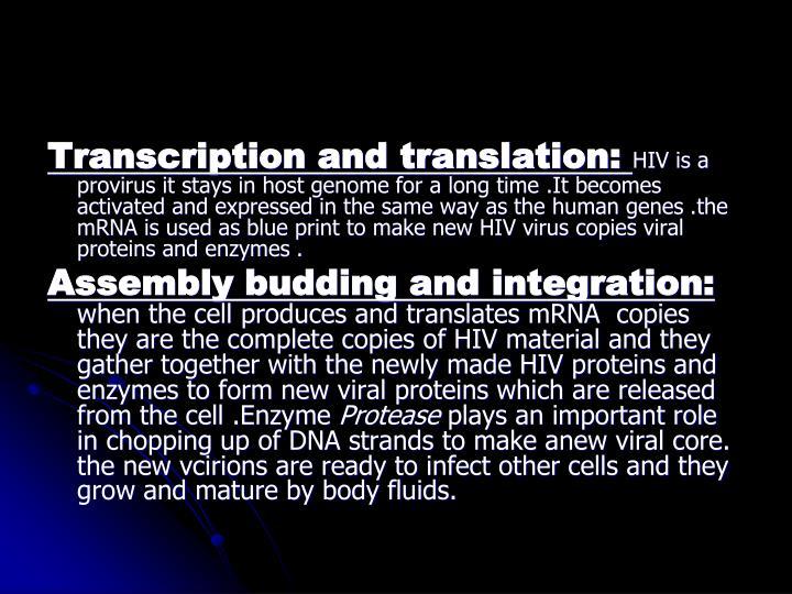 Transcription and translation: