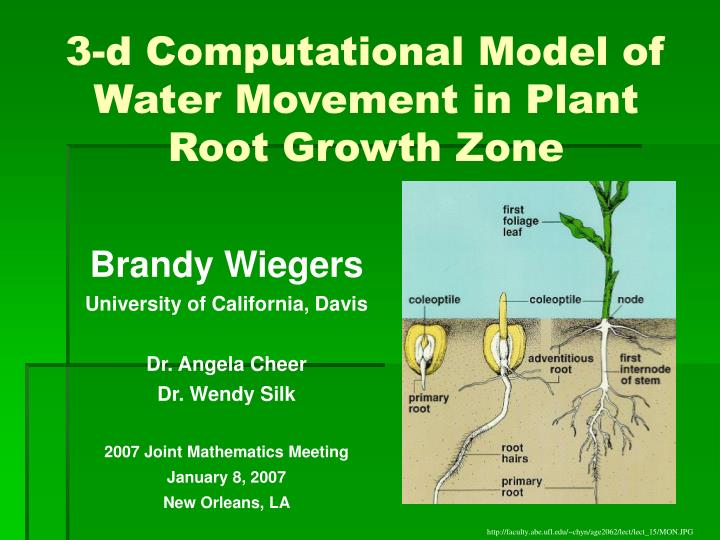 water movement in plants To determine the validly of this claim, the same plants with different numbers of leaves were tested with same amounts of water, same temperature, and same apparatus and other carefully controlled variables introduction 1 plants draw water in through their roots, and then transport it through the xylem up to the branches and leaves water.