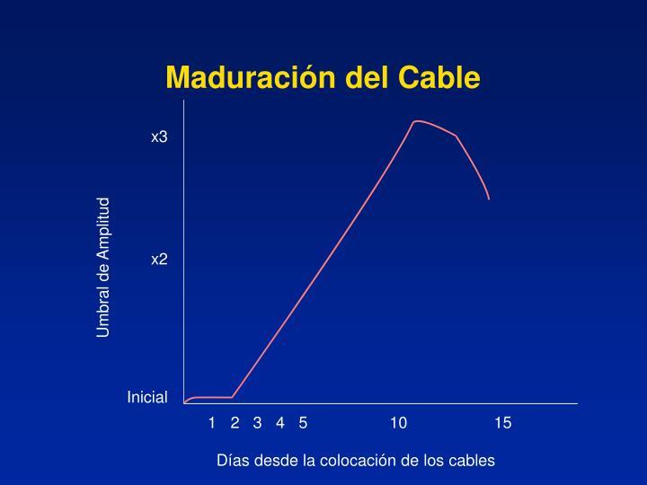 Maduración del Cable