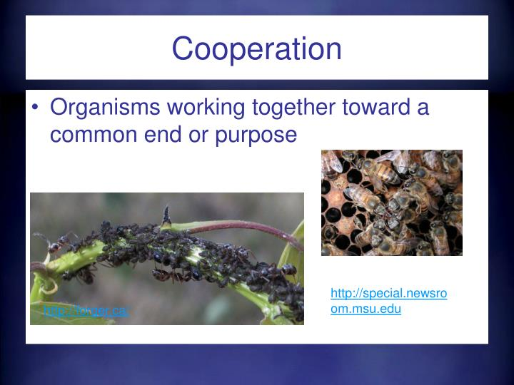 PPT - Relationships in Ecosystems PowerPoint Presentation ...