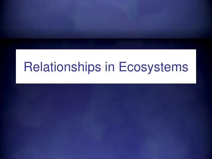 relationships in ecosystems n.
