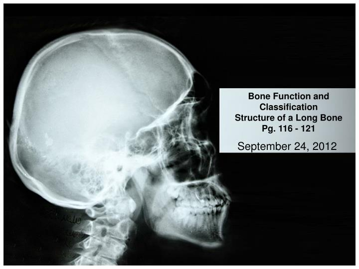 bone function and classification structure of a long bone pg 116 121 n.