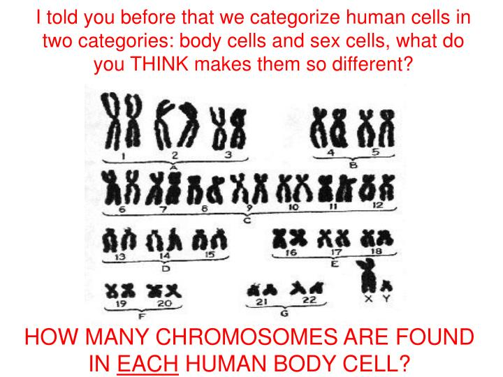 How many chromosomes are in a sex cell