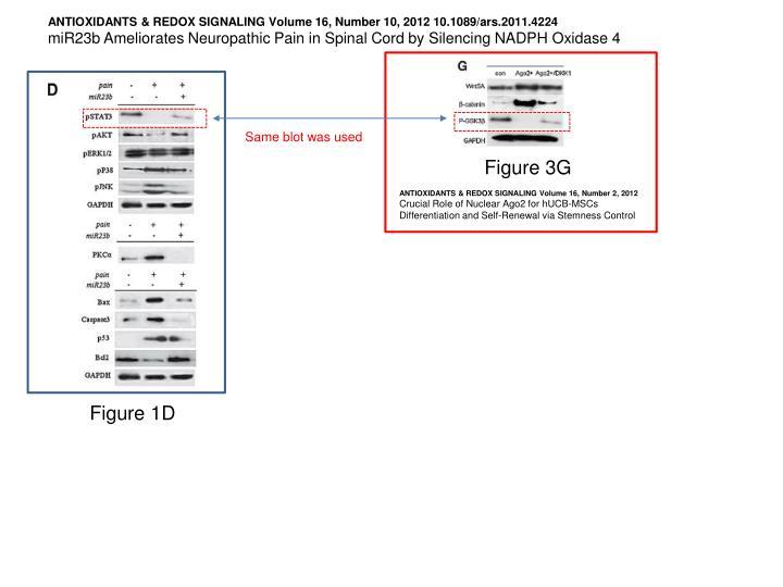 ANTIOXIDANTS & REDOX SIGNALING Volume 16, Number 10, 2012 10.1089/ars.2011.4224