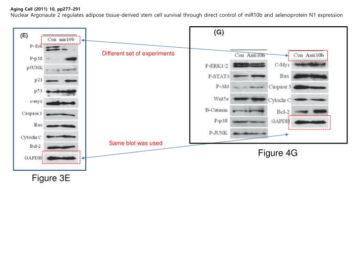 Aging Cell (2011) 10, pp277–291