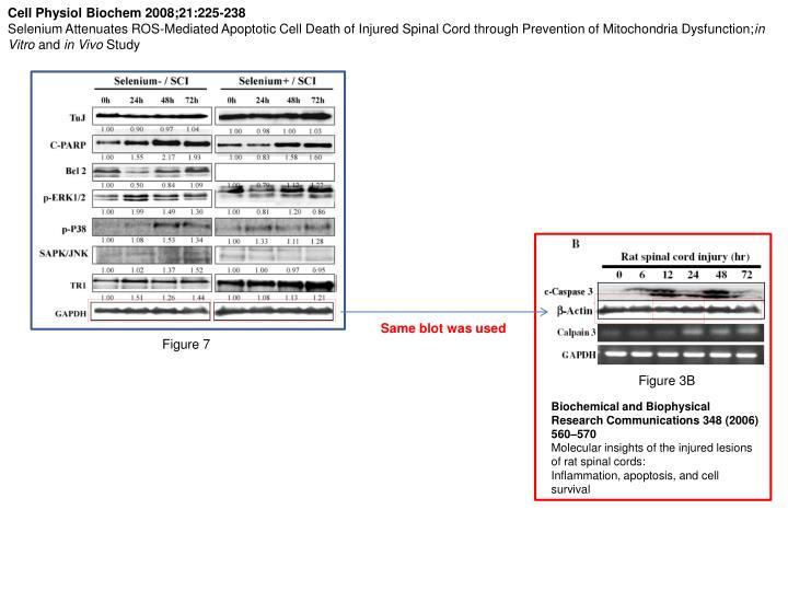 Cell Physiol Biochem 2008;21:225-238