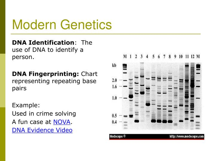 Modern Genetics