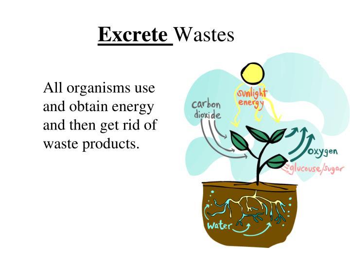 Excrete