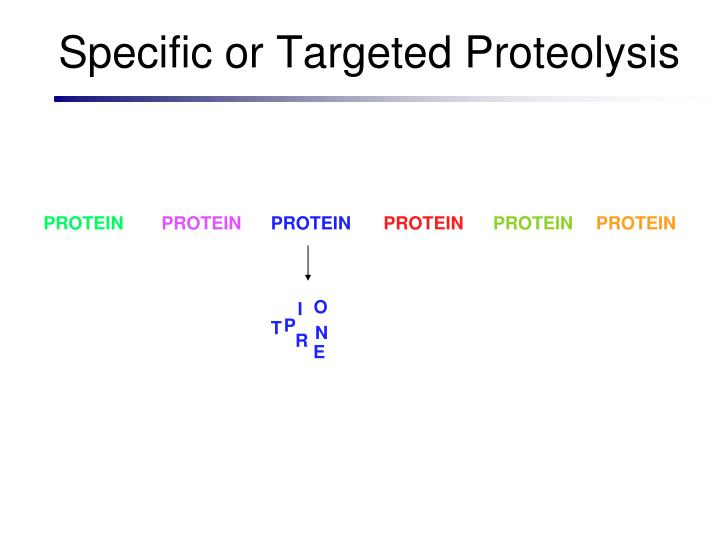 Specific or Targeted Proteolysis