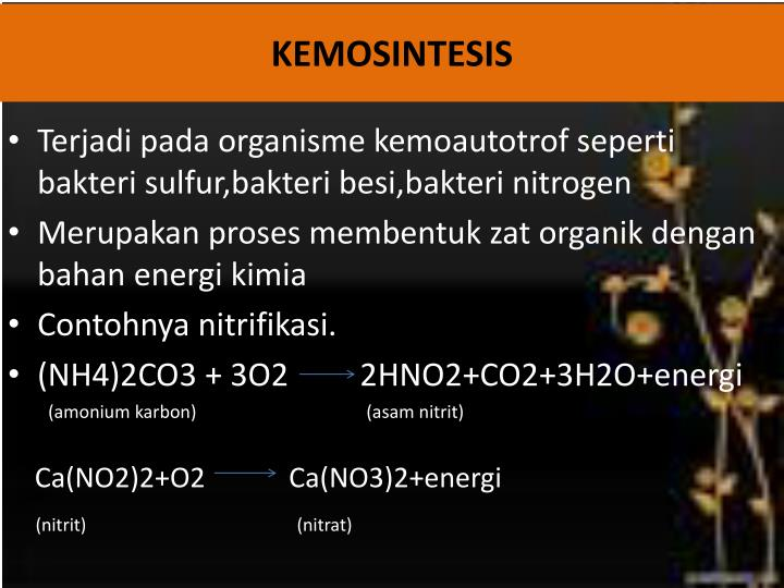 PPT - ANABOLISME PowerPoint Presentation - ID:5764718
