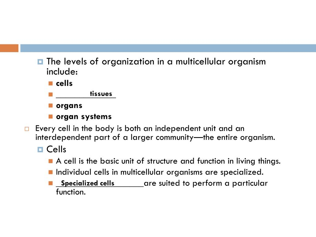 PPT - Chapter 35 Section 1 Human Body Systems PowerPoint ...