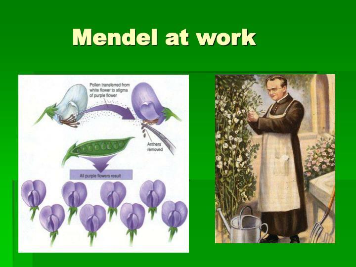 Mendel at work
