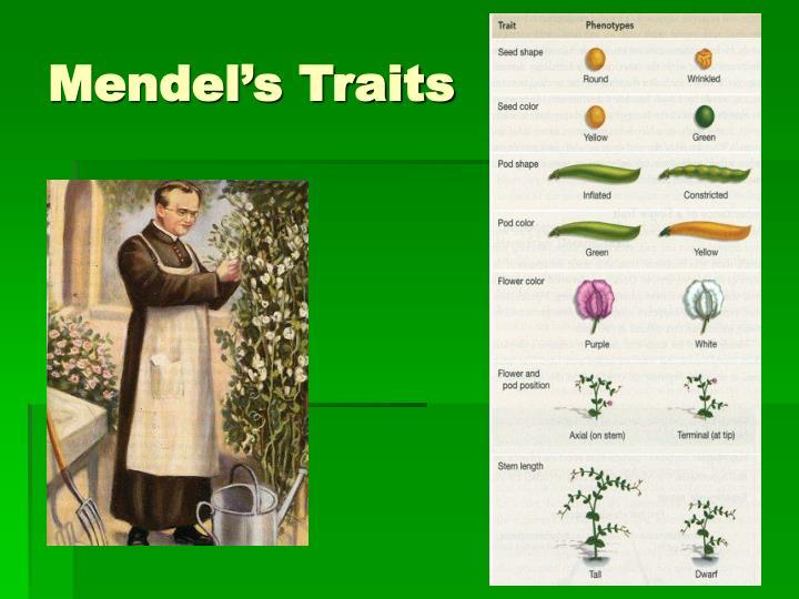 Mendel's Traits