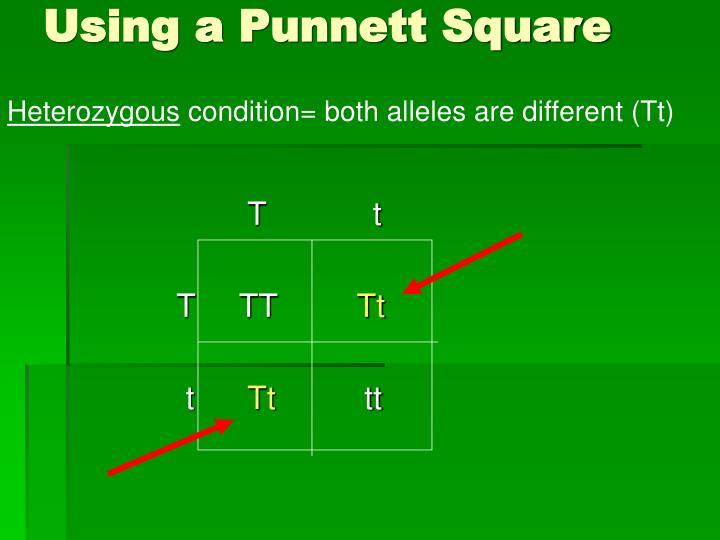 Using a Punnett Square
