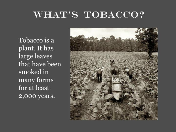 What s tobacco