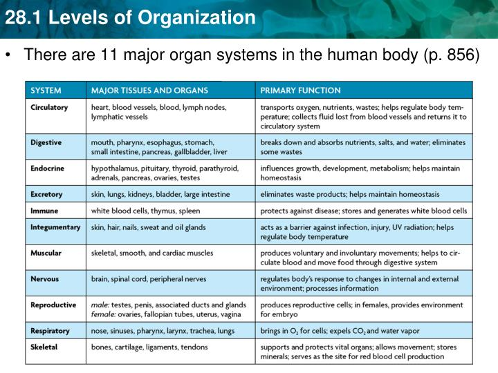There are 11 major organ systems in the human body (p. 856)