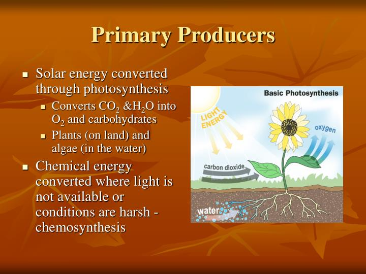 Primary Producers